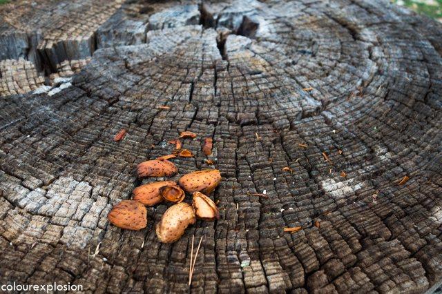 Que buen sitio para partir unas almendras, o para esta época, unas nueces de Nerpio ;)