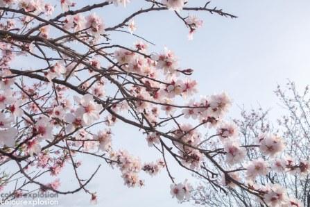 Unas flores